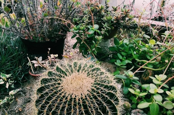 Ciekawe miejsca: Kaktusiarnia Rumia