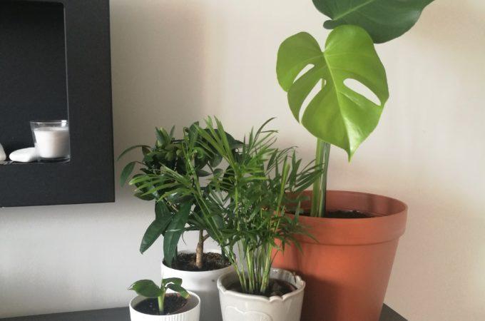 Urban Jungle czyli jak tanim kosztem zwiększyć ilość roślin w domu