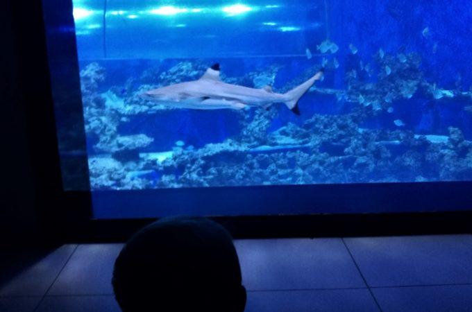 Rekiny na wyciągnięcie ręki. Aquapark Reda