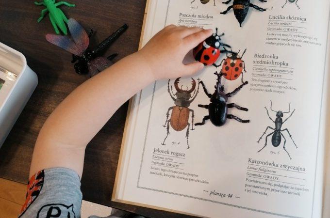 Ilustrowany inwentarz zwierząt – recenzja i podsumowanie tematu owady