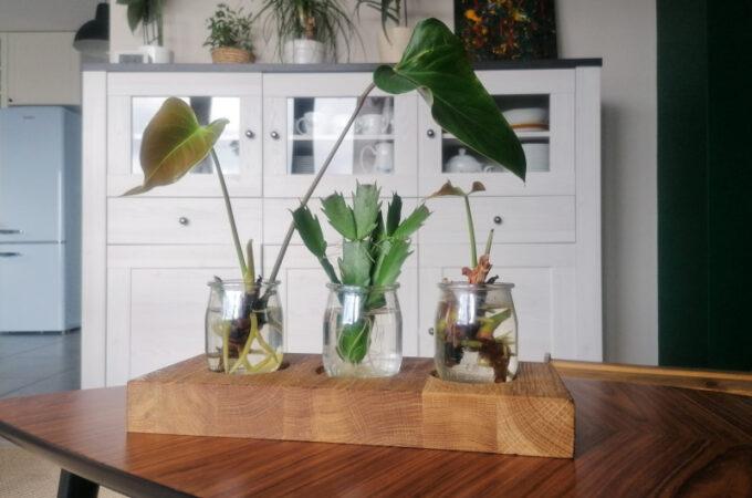 Drewniany stojak na szczepki kwiatów DIY | Stacja do ukorzeniania roślin