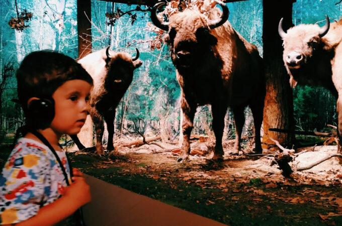Muzeum Przyrodnicze Białowieskiego Parku Narodowego w Białowieży