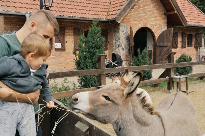Zalesie Mazury Active Spa – cudowne miejsce na rodzinne wakacje na Mazurach